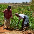 """<div class=""""at-above-post-cat-page addthis_tool"""" data-url=""""http://trademission.kenyagreece.com/en2013/agricultural-products-in-kenya/""""></div> Agriculture remains the most important economic activity in Kenya, although less than 8% of the land is used for crop and feed production.<!-- AddThis Advanced Settings above via filter on get_the_excerpt --><!-- AddThis Advanced Settings below via filter on get_the_excerpt --><!-- AddThis Advanced Settings generic via filter on get_the_excerpt --><!-- AddThis Share Buttons above via filter on get_the_excerpt --><!-- AddThis Share Buttons below via filter on get_the_excerpt --><div class=""""at-below-post-cat-page addthis_tool"""" data-url=""""http://trademission.kenyagreece.com/en2013/agricultural-products-in-kenya/""""></div><!-- AddThis Share Buttons generic via filter on get_the_excerpt -->"""